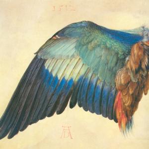 Flügel einer blauen Rolle