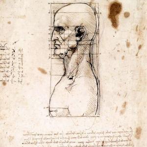 Testa maschile di profilo con proporzioni