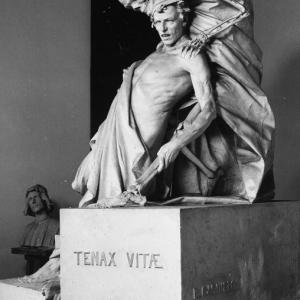Tenax Vitae