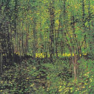 Bäume und Unterholz